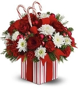 """Candy Cane Wishes"" - Fresh Flower Design"