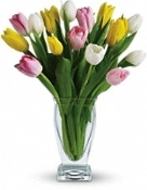 """Spring Tulips"" Assorted - Fresh Flower Design"