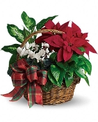 Home for the Holidays- Blooming Plant Basket