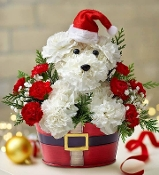 """Holiday Puppy Kisses""- Fresh Flower Design"