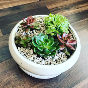"""Nature's Beauty"" - Premium Succulent Garden"